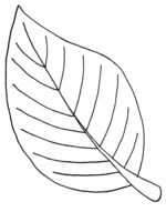 leaf coloring pages 3